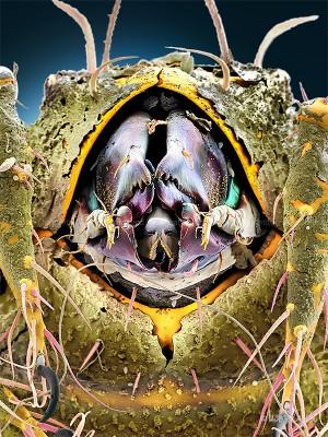Oeggerli-Hermannellidae-007c3kVhi337_ART
