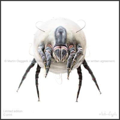 Oeggerli-Dermatophagoides-002ART-natural